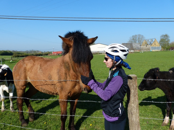 A nose rub for a very friendly horse