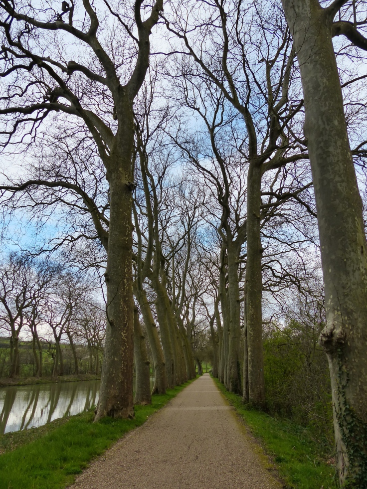 I love riding through the avenues of trees