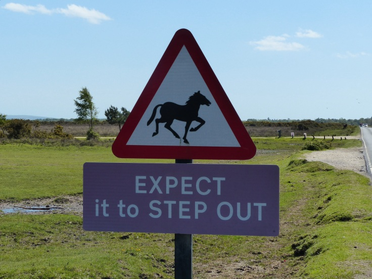 A sign warning motorists that ponies may suddenly begin a dance of the Hokey Pokey