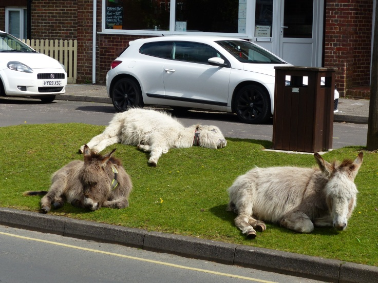 There were donkeys in the park and even here...the main street of Brockenhurst!