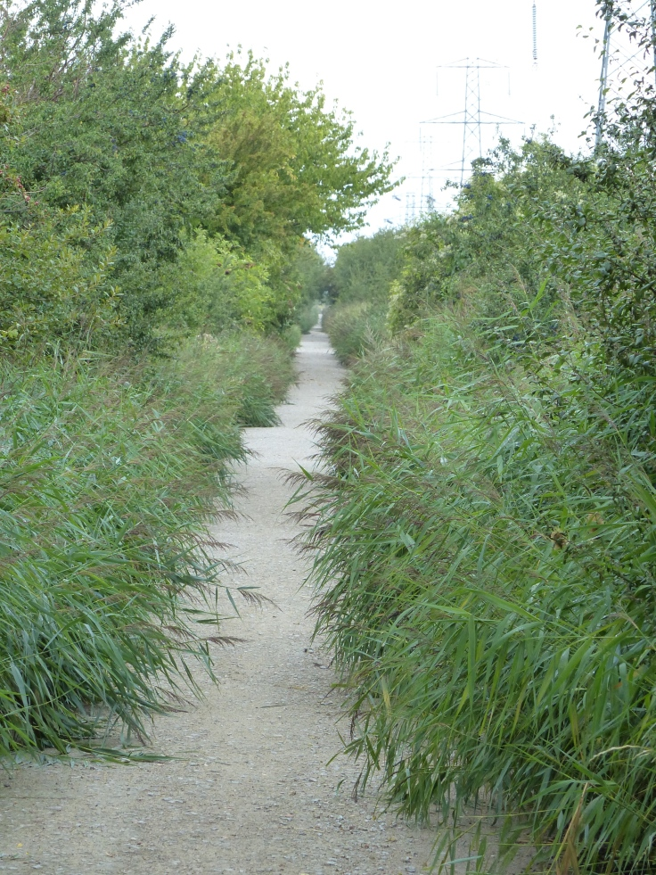 No need to worry about this path