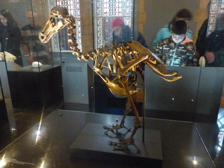 Yep, it's a dodo!