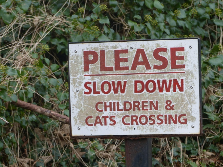 There were only three small cottages in the area of this sign, but residents obviously wanted motorists to mind the moggies!