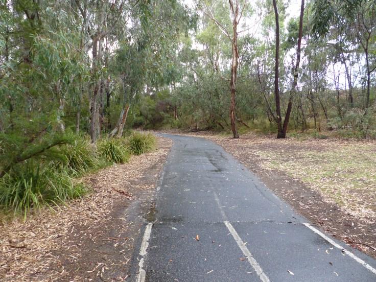 A great path through the bush